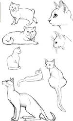 Cat Poses: Study 2 by FlameFoxe