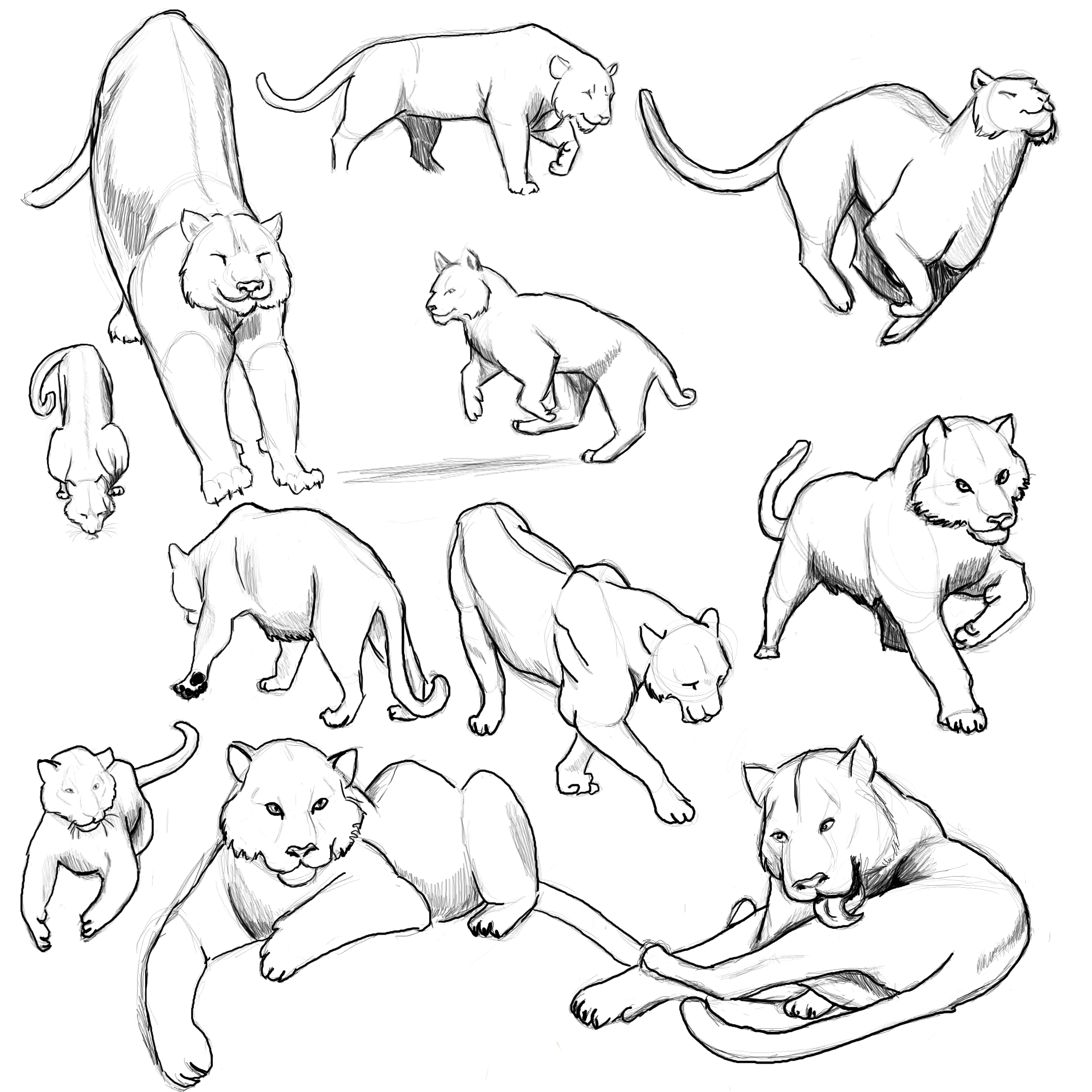 Tiger Poses: Study 1