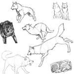 Wolf Poses: Study 1