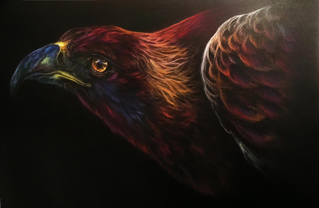 Golden Eagle Pastel by Elsouille