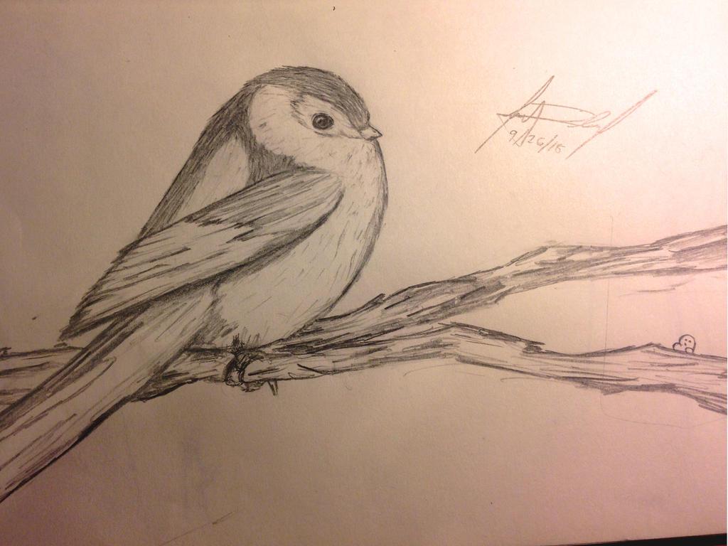 A Chubby Birdie by Nics-MP