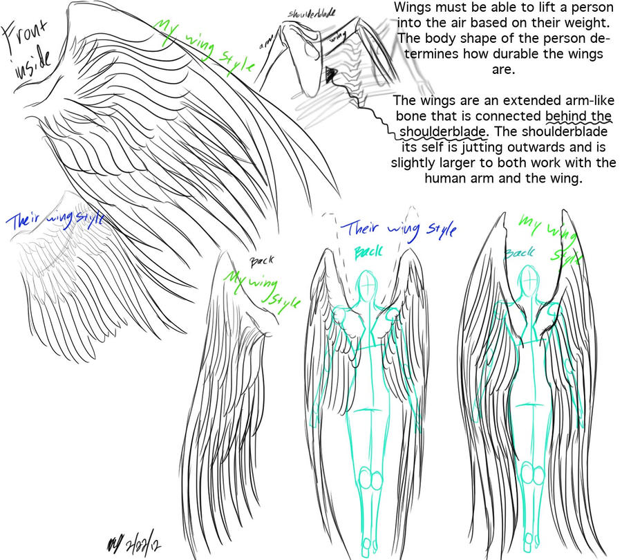 Angel wings anatomy wings anatomy and reference by