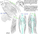Wings anatomy and reference
