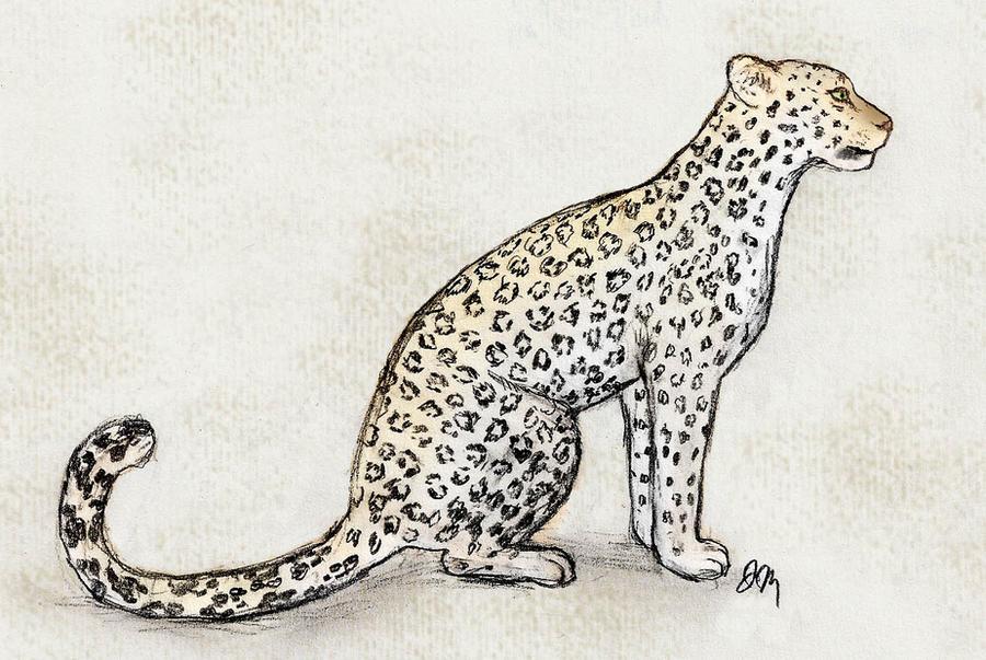 Arabian Leopard by graphiteforlunch