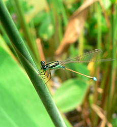 Smiling dragonfly :D