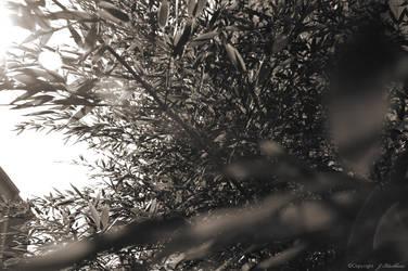 Black Bamboo by darklineink
