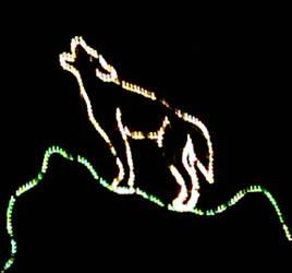 Wolf in Light in the Dark