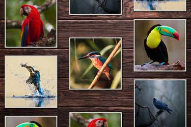 Amazing Birds Animal Desktop Wallpaper Collection by fisabilillah