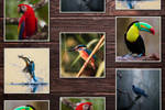 Amazing Birds Animal Desktop Wallpaper Collection by fisabilillah