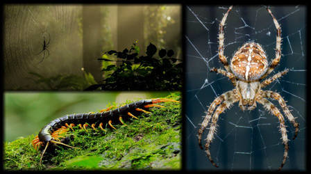 Bugs, Butterflies, Insects and Spiders Wallpapers by fisabilillah