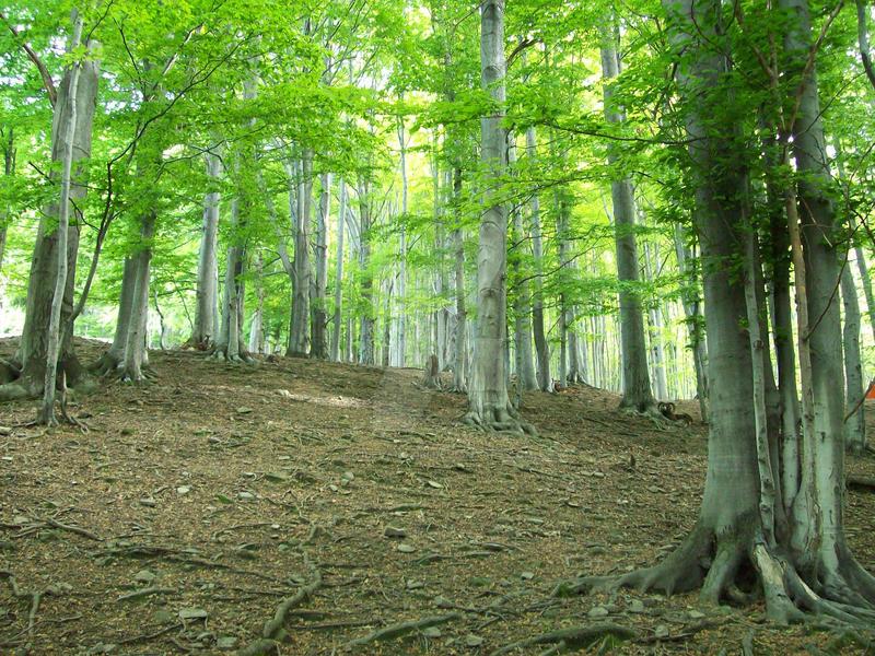 Green Forest by vilevalozibi