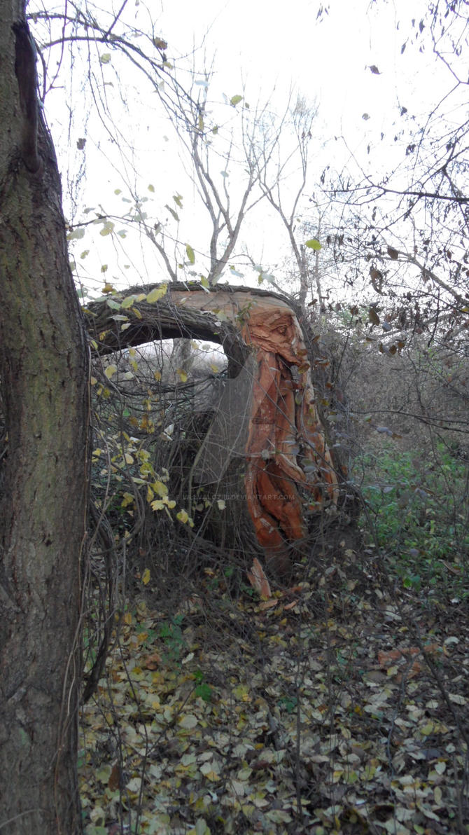 Wounded tree by vilevalozibi