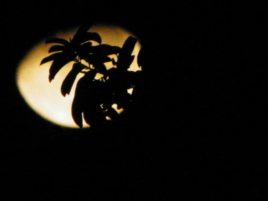 My Moon by semidragon