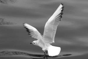 take off by phoTOMgraphy