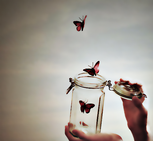 http://fc06.deviantart.net/fs70/f/2012/034/a/3/butterflies_by_toukosakura-d4okg9h.png