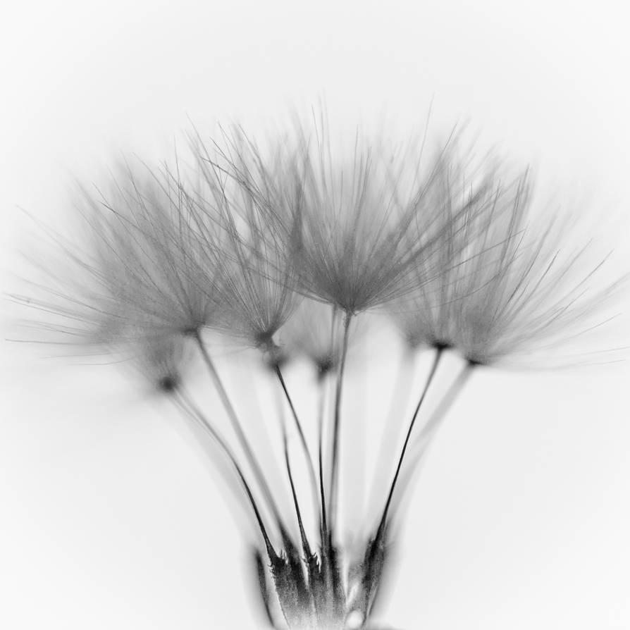 Tenderness 3 by pillendrehr