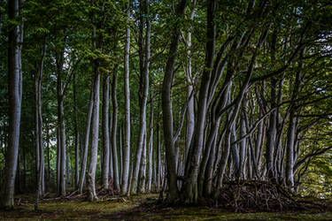 Deep in the Forest 4 by pillendrehr