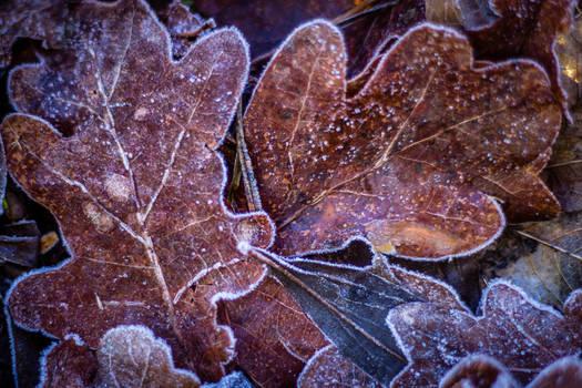 A Breath of Winter 1
