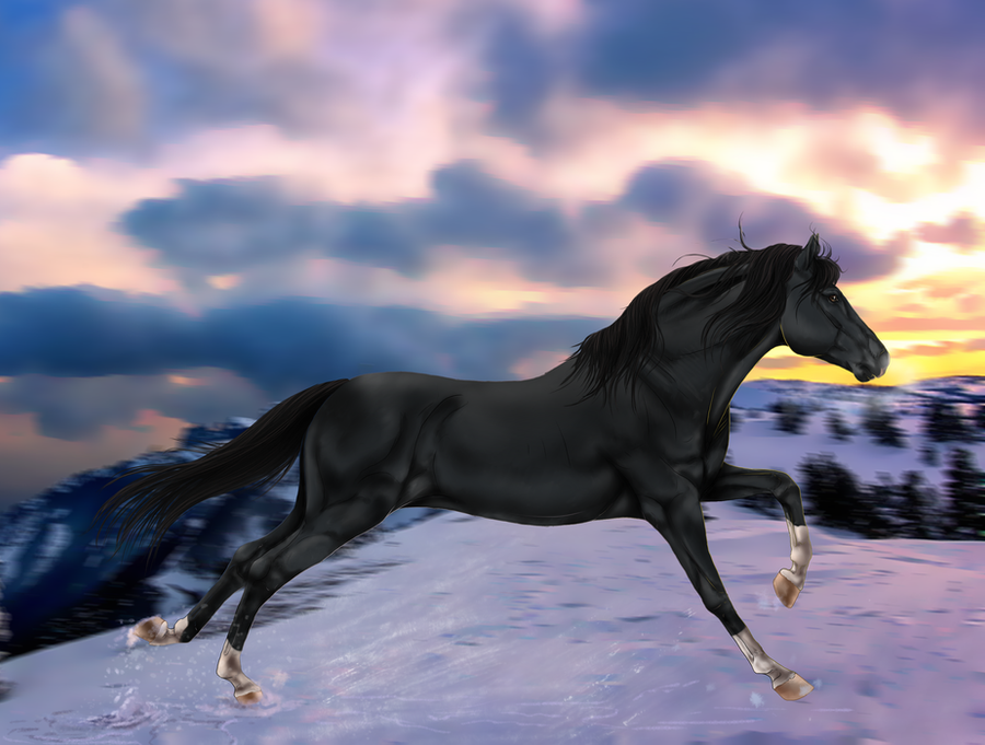 Jd black jack stallion