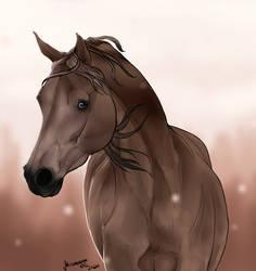 ~ Arabian Horse Headshot ~