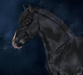~ Pura Raza Espanola Stallion ~