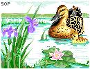 Ducks on water by Blazin-Hearted
