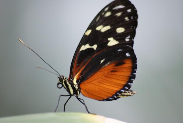 Butterfly by RobbertK