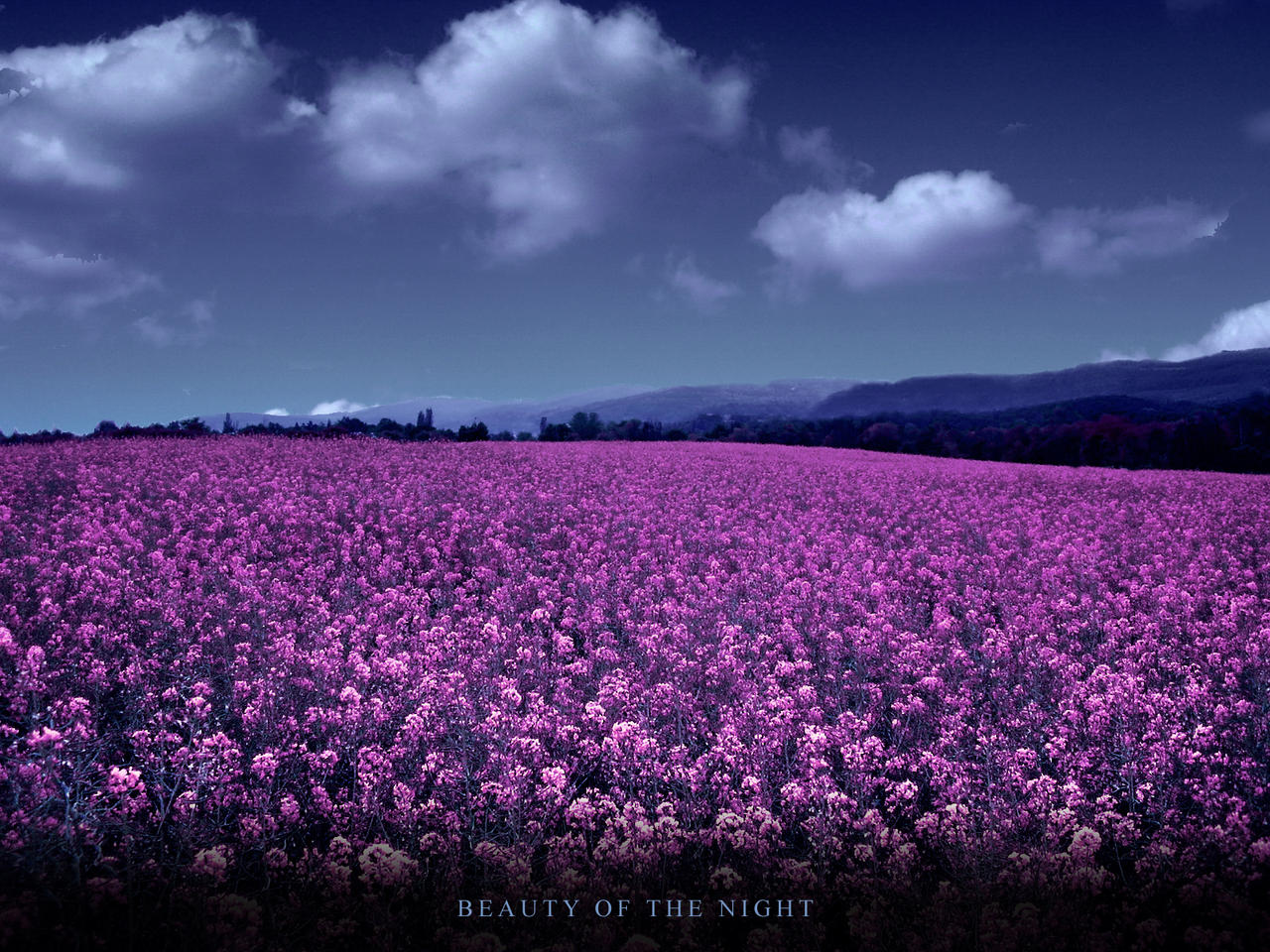 Beauty of the night flowers by dragonetty on deviantart beauty of the night flowers by dragonetty izmirmasajfo