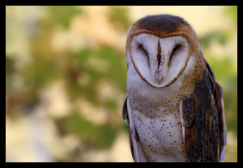 Bubo by darthpayback