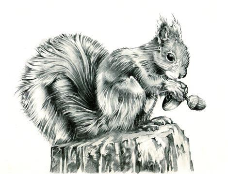 Squirrel by Sparkmachine