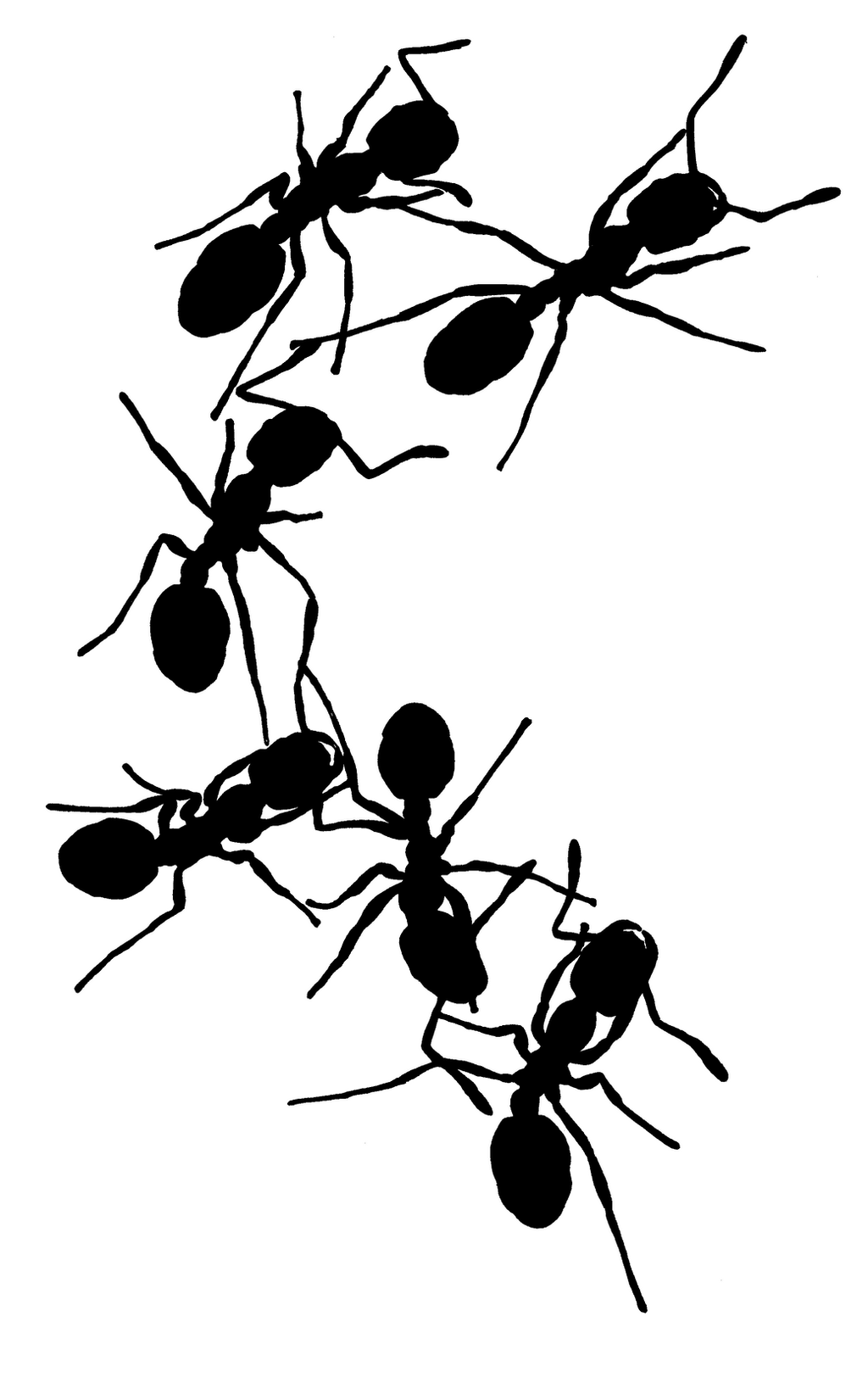 Ants  silhouette by Zu...
