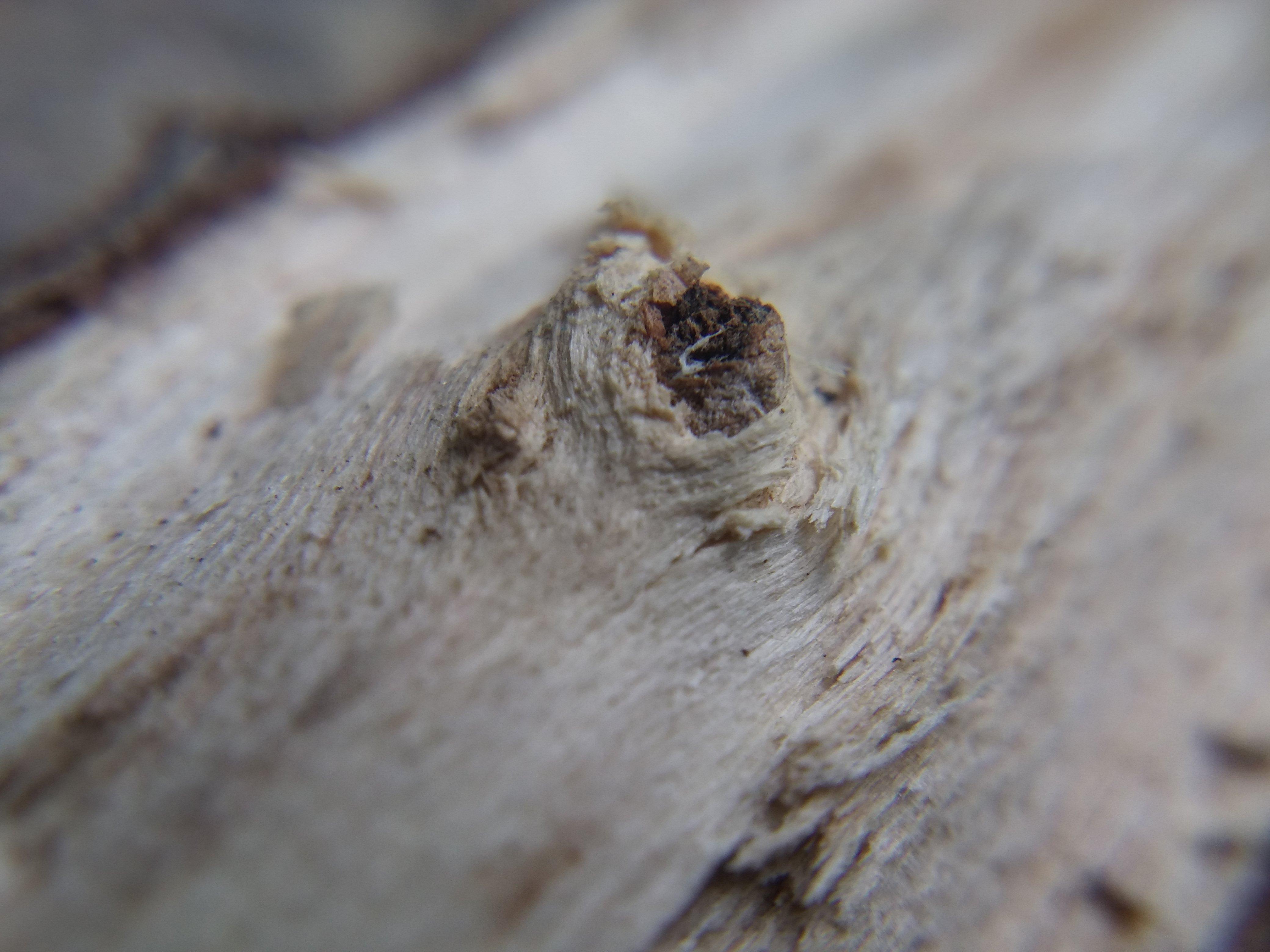 Wood details by Kryuko