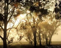 Light rays by eyeluvroses
