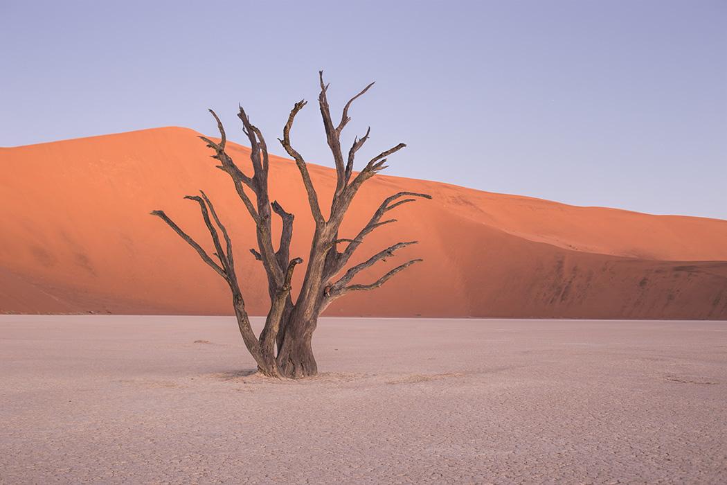 Lone Tree by paikan07
