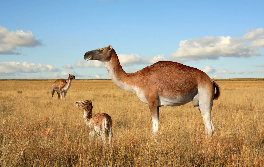 Camelops hesternus by PhilipEdwin