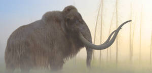 Woolly Mammoth by PhilipEdwin