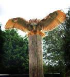 Eagle Owl 01