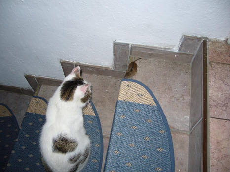 Nicky and a mouse