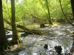Swampy Place