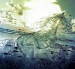 Water Stallion