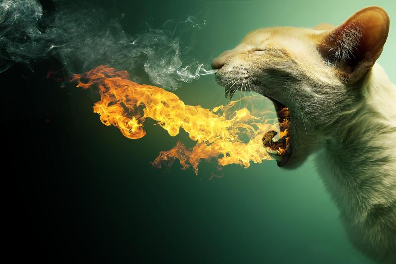 Flaming Cat - Now as DA print by PSHoudini