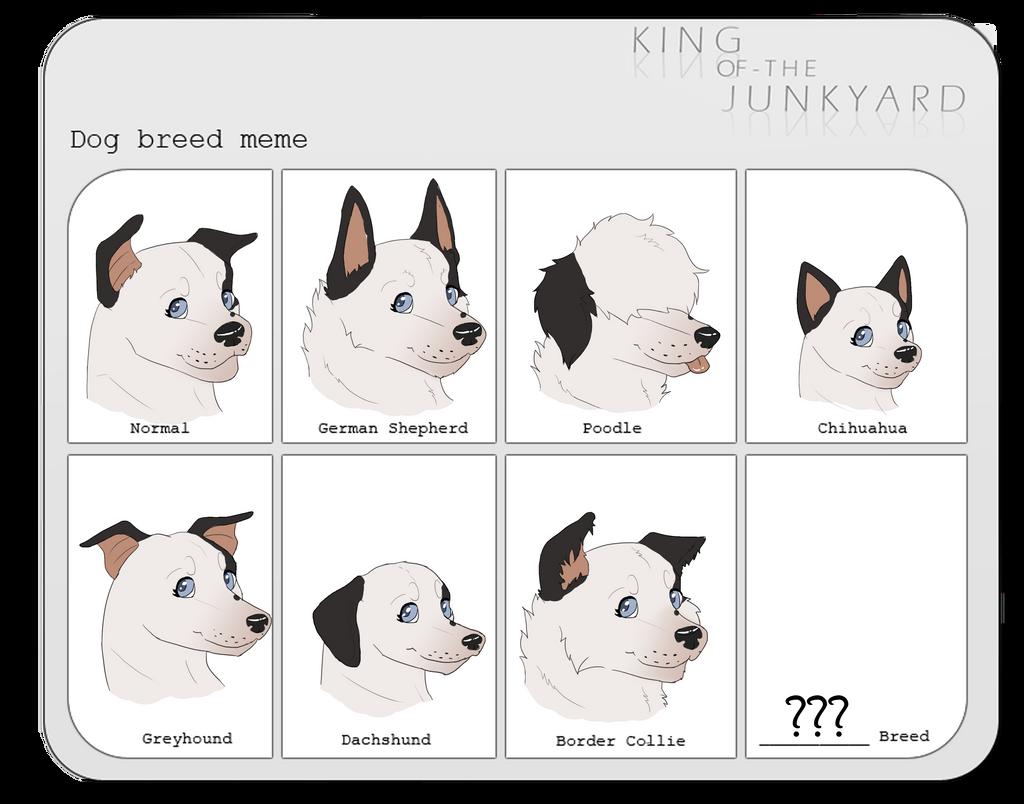 .:KotJ | Londynn | Dog Breed Meme:. by Eboniz on DeviantArt