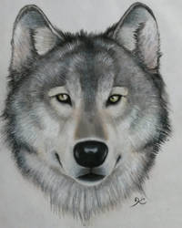 Wolf face by CapeKelpie