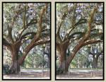 stereoscopic tree