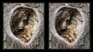 tree hole stereoscopic