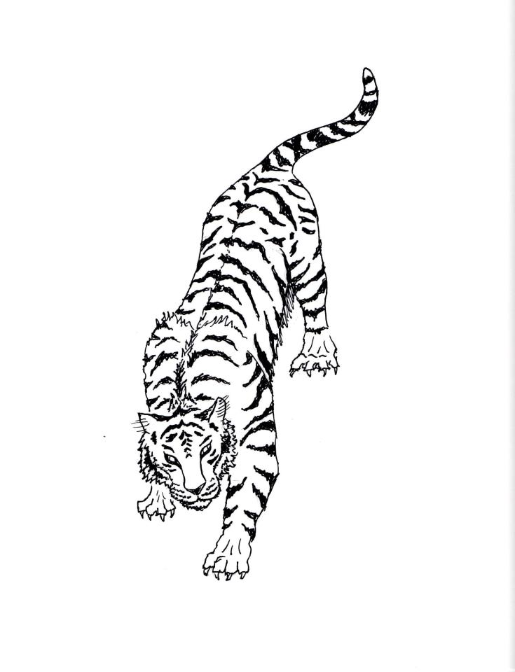 White Tiger Drawing By Ukr11can On DeviantArt