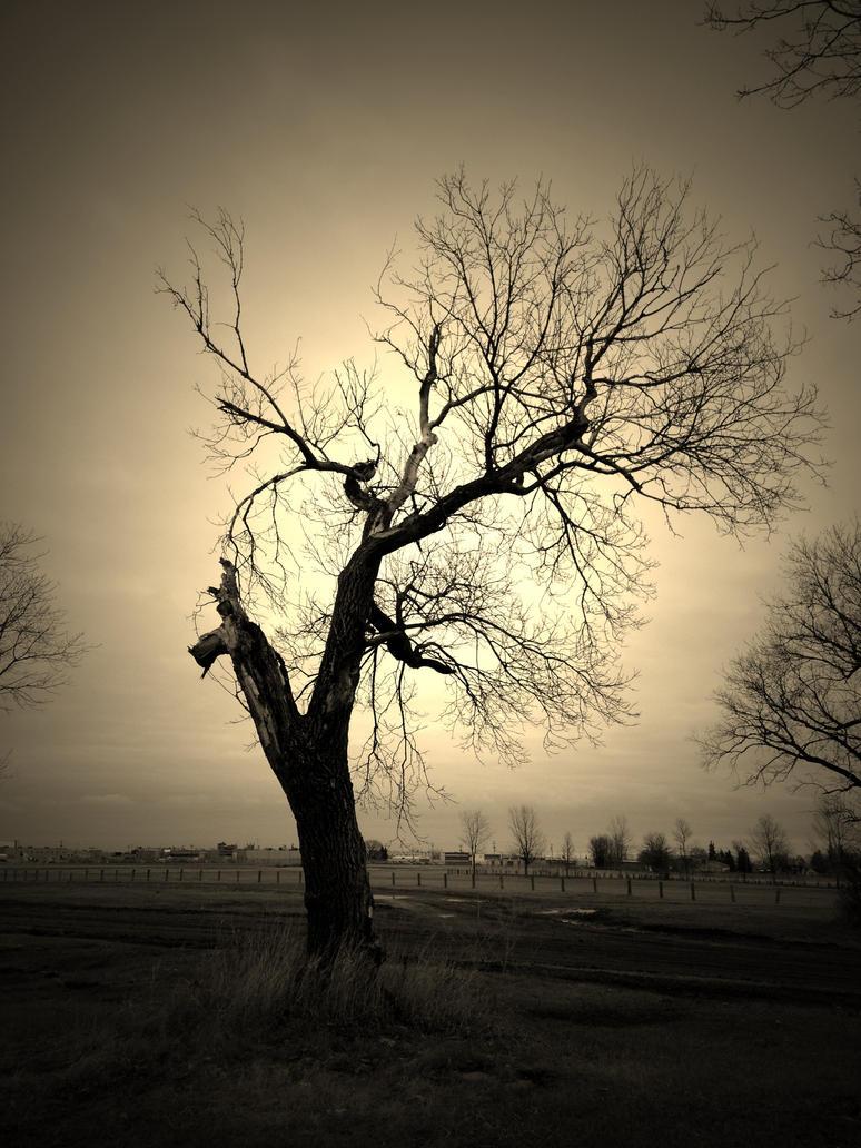 Dark Tree by ukr11can on deviantART