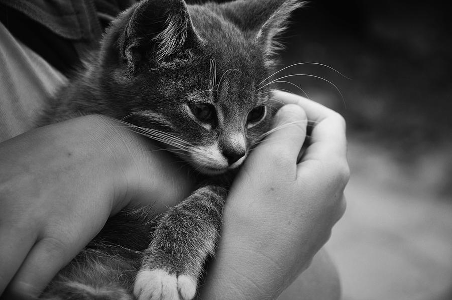 little friend by JuliannaRembrandt