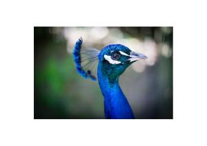 Nashref's Profile Picture