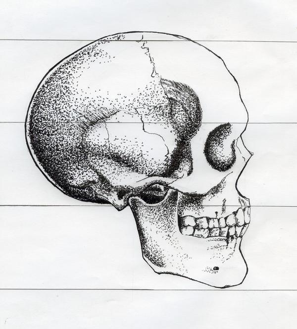 Skull sketch side view by michaeldaviniart on DeviantArt